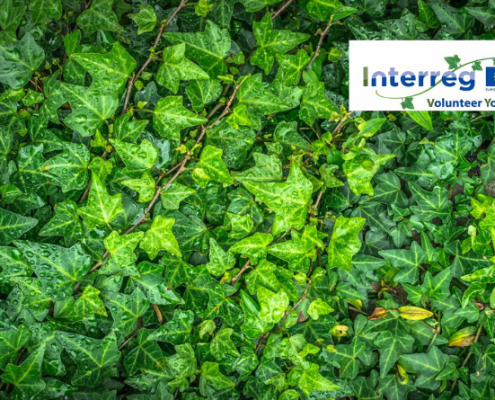 ivy interreg volunteer youth